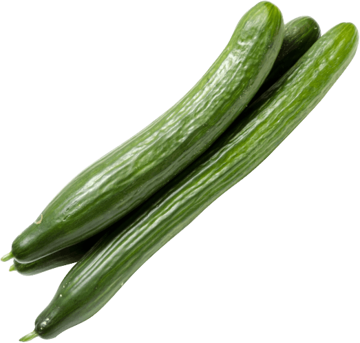 Drenthe Growers Cucumbers